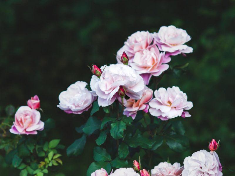 Comment faire un jardin romantique à l'anglaise ?